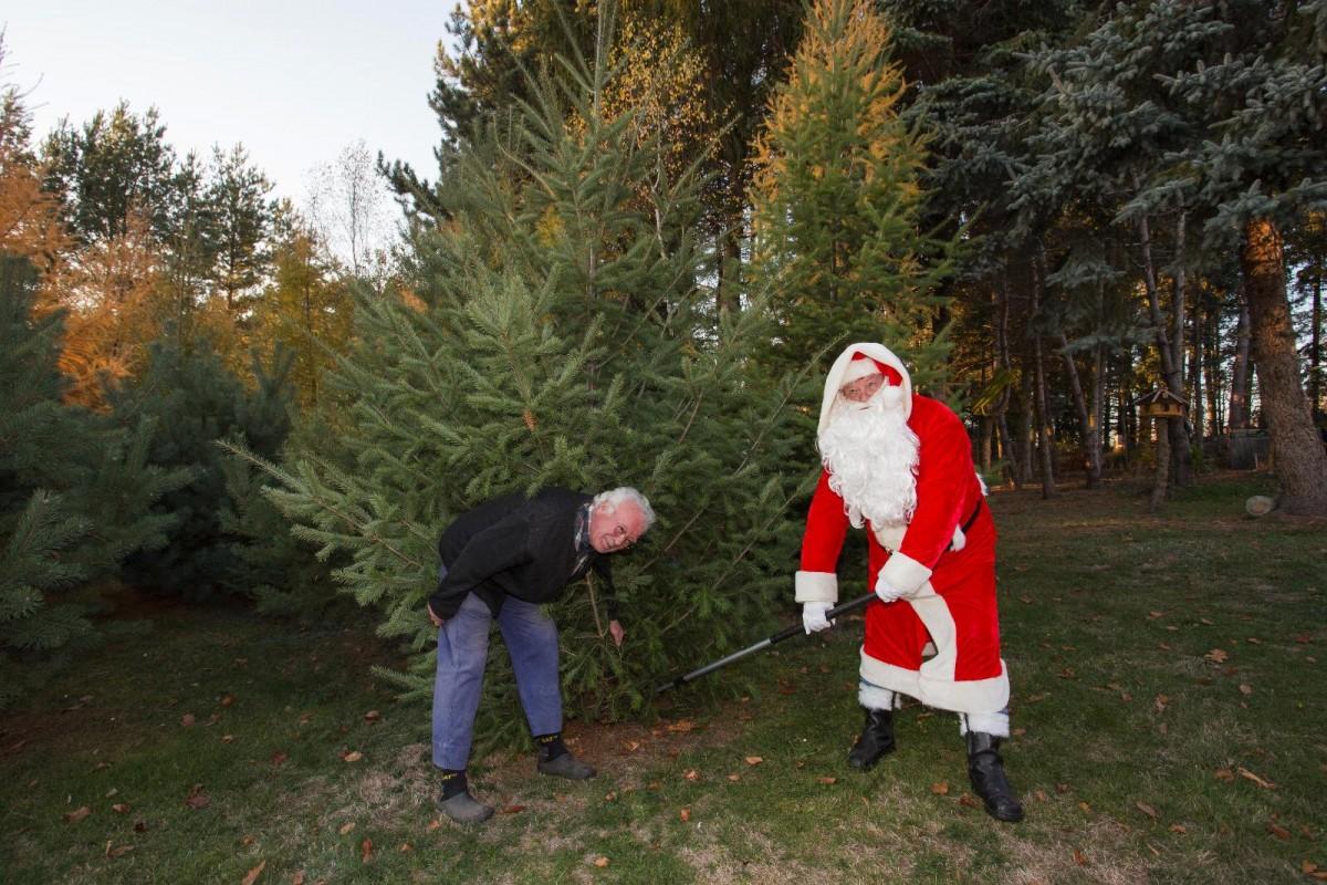 Wie Entstand Der Weihnachtsbaum.Weihnachtsbaum Für Den Bingenblick Seiffen