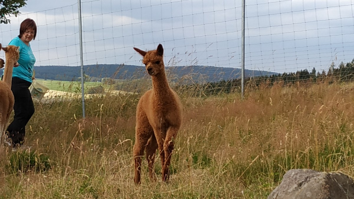 Alpaka Ranch Seiffen