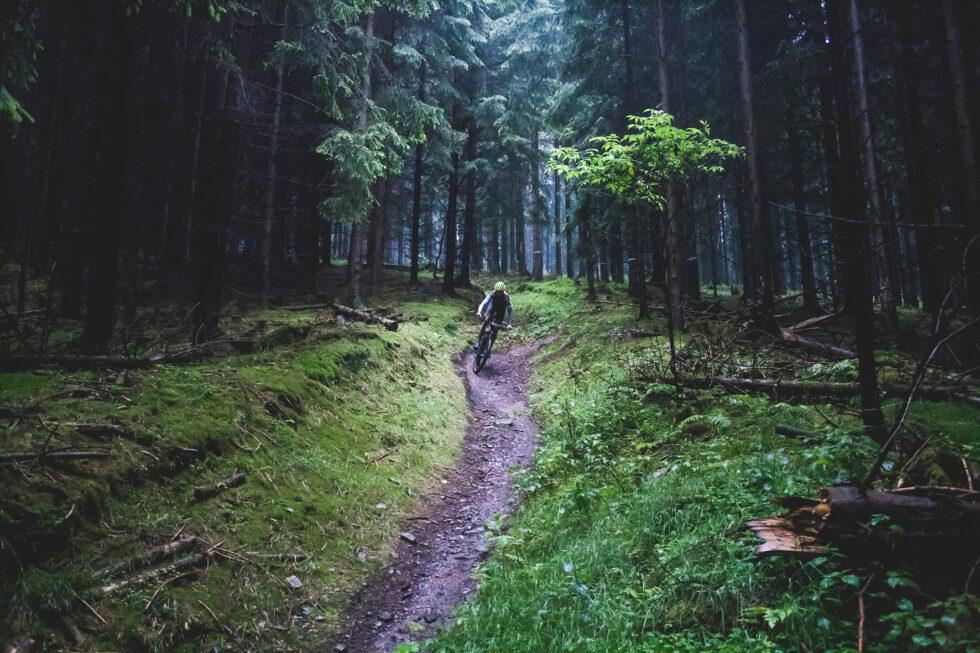 """Waidmannsheil zur """"Treibjagd im Dunkelwald"""" 1"""